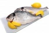 Freshfish2